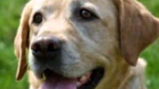 Dog Trainers - Chiltern Dog School