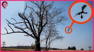Quái Vật ĐẦU DÊ CÁNH DƠI Vô Tình Bị Camera Quay Lại Điều Bí Ẩn Chưa Có Lời Giải | Top 10 Sự Thật