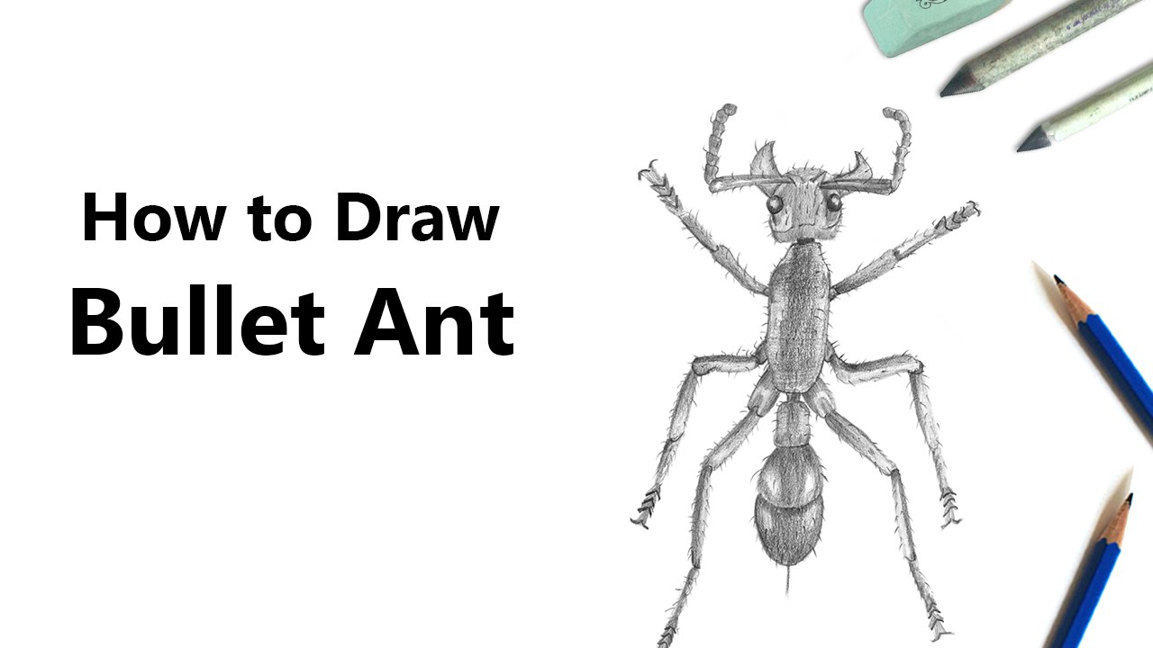 how to draw a bullet ant with pencils time lapse