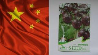 Семена почтой из Китая - Семена чёрного помидора(Купить семена чёрного помидора: http://ali.pub/hf35p #Семена #Семена_почтой #Чёрный_помидор #Помидор #Томат., 2015-05-31T18:21:09.000Z)