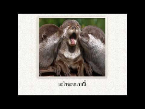 ภาพน่ารักๆของสัตว์ทั่วทุกมุมโลก