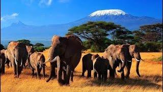 фильм документальный 2018 Дикий мир животных. Природа Африки. Документальный фильм.