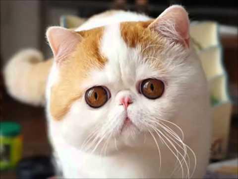 Рыжие плюшевые коты