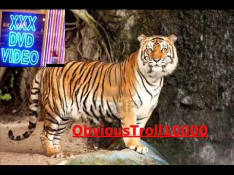 Tiger xxx video — photo 2