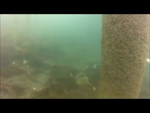 Piling inspection and sea star encounter in Sand Point, AK by High Tide Exploration