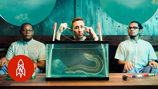 An Eel To Never Feel | The Aquatic World With Philippe Cousteau, S2 EP 7