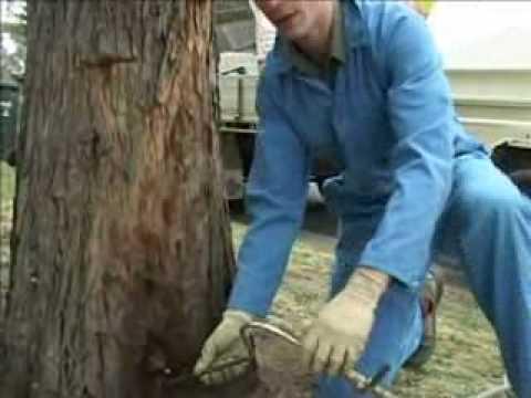 Tree Termite Nest Control Youtube
