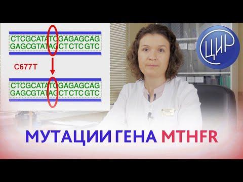 Мутации гена  MTHFR (метилентетрагидрофолатредуктазы). Кочанжи М.И.