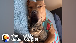 Kitten Isn't Sure About His Pittie Brother — At First  | The Dodo Odd Couples