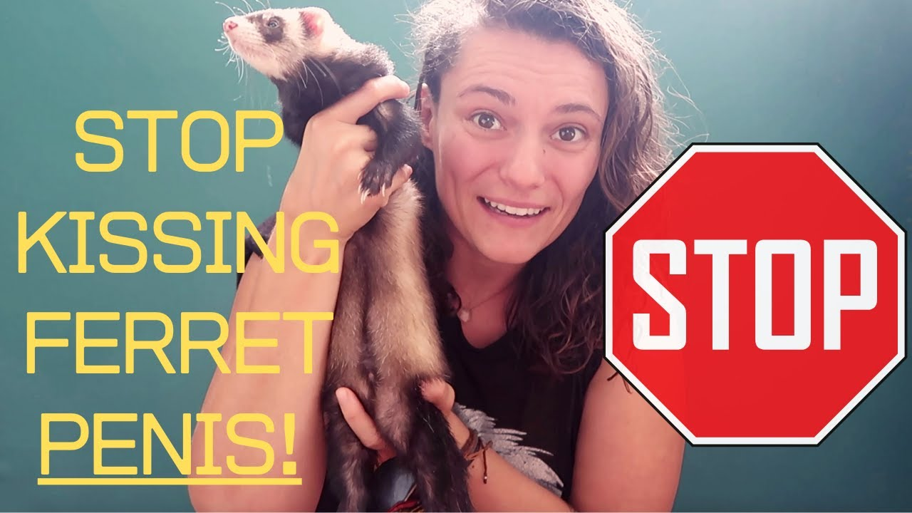 STOP KISSING FERRET PENIS