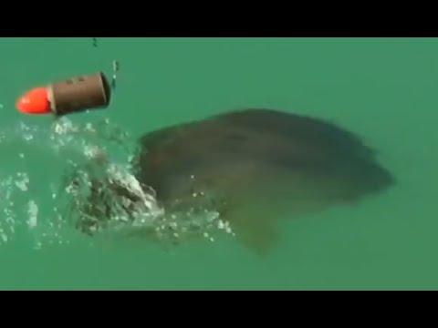 Giuseppe Trani spiega COME PESCARE a FLOATING FEEDER (pasturatore galleggiante)