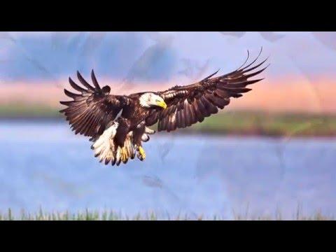 Birding In Dorchester County, Maryland