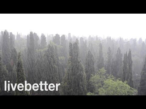 Lluvia Fuerte en el Bosque para Relajarse y Dormir - Sonidos de Gotas de Agua Intensa sin Truenos