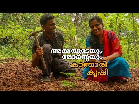 കാന്താരി മുളക് കൃഷി Part 2 | Kanthari Krishi | Birds Eye Chilli Farming In Malayalam