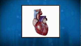 What is Cardiovascular Disease? Doctor Akshay Khandelwal Explains