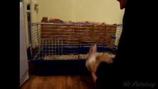 Jak zasypia królik