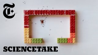 Can Ants Master a Lego Obstacle Course? | ScienceTake