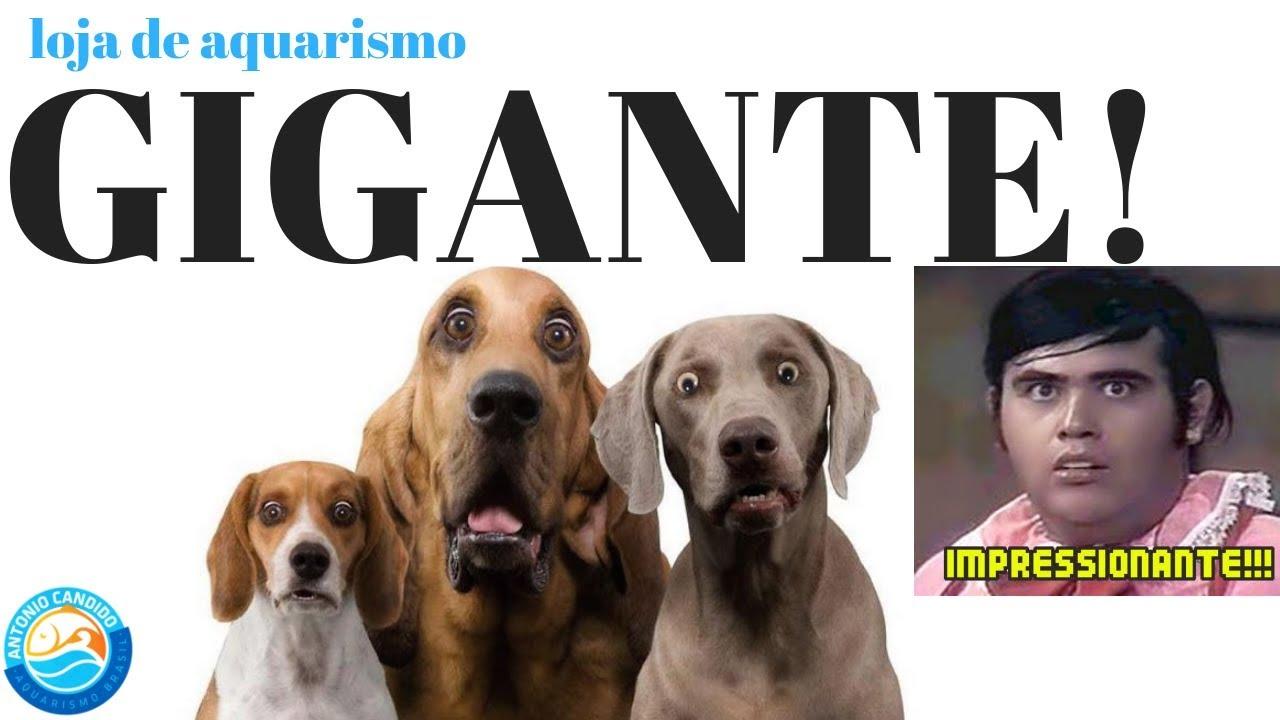 LOJA DE AQUARISMO SP !!!GIGANTE!!! POR DENTRO DA COBASI Marginal Tietê