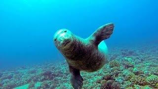 Dive Niihau - Monk Seal