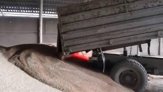 Зерно урожая 2017 поступает в хранилища