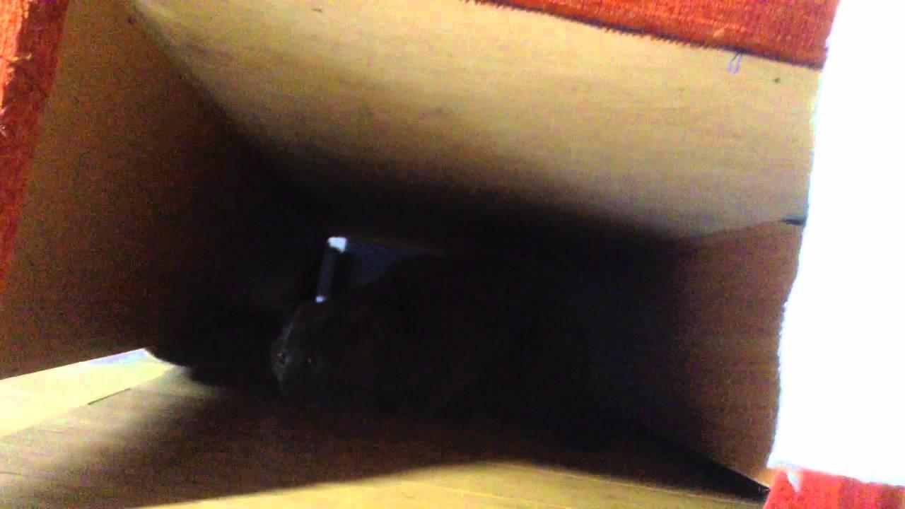 Брайан мой кот пытается меня убить