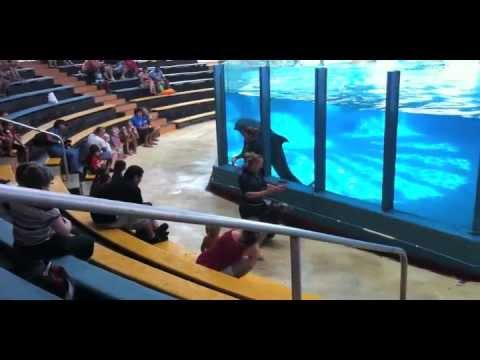 Sea Life Park Hawaii - A Fun Filled Oahu Activity