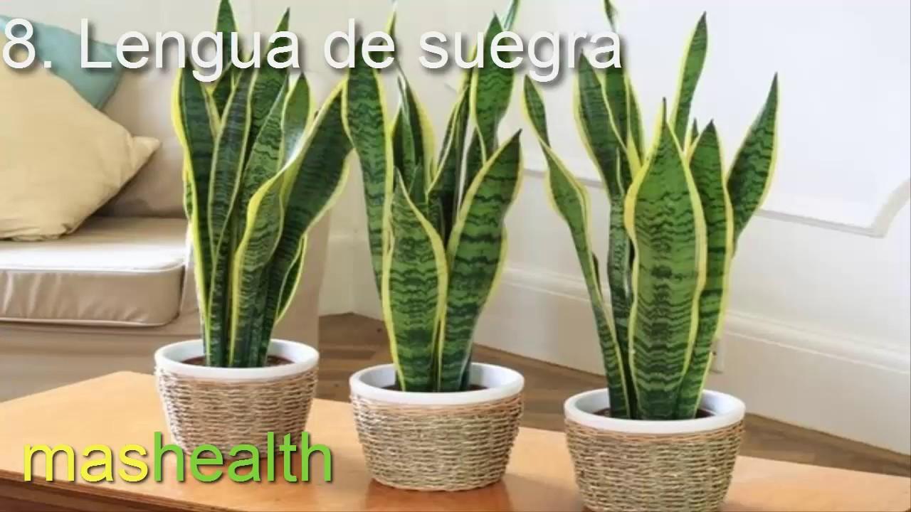 8 plantas que purifican el aire de tu hogar youtube - Plantas de interior que purifican el aire ...