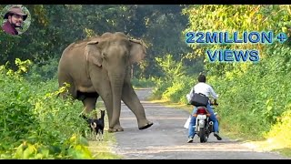 Elephant Suddenly Appeared In Front of a Biker.
