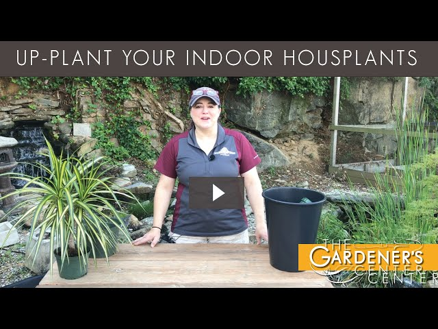 8/21/2020 Up Plant Houseplants with Joy
