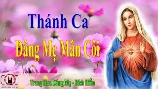 Thnh Ca Dng M Mn Ci 2019