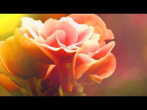 Какие цветы выбрать для дома