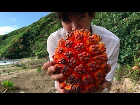 【リアル悪魔の実】爆弾みたいな木の実を見つけたので食べてみたら・・・ 無人島で遭難#2