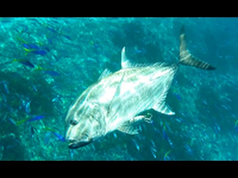 Seychelles Praslin Fishing February 2016