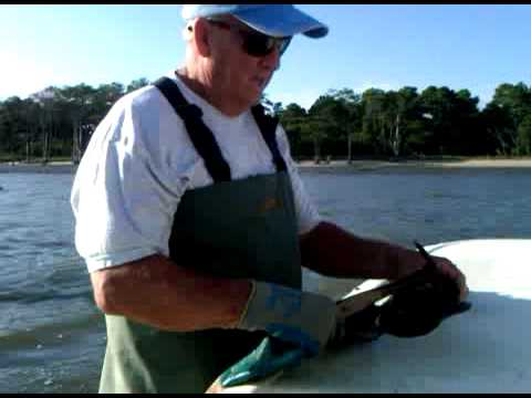 Oysterman Tommy Mason in Chincoteague