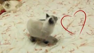 Кот-дельфин ловит муху | Cat-dolphin | Кот странно себя ведёт | Часть 1