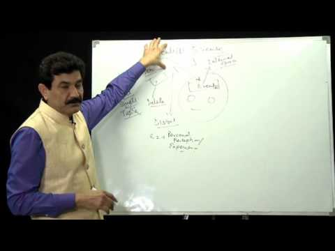 What is  Wellness by  Ram Verma in Hindi- NLP Training in India