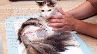 Кошка упала с высоты и стала бездомной Жестокое предательство cat disabled person waiting for help