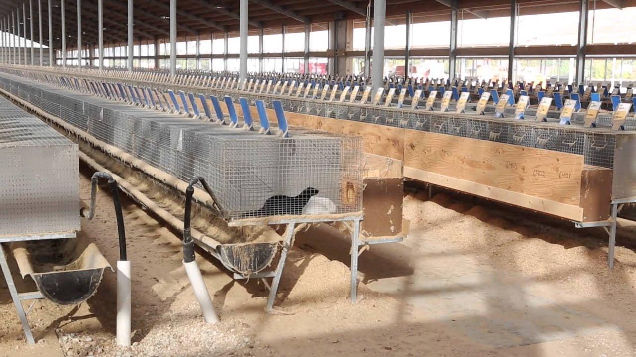2be0d2fe13d Mink Farming | Fur Commission USA