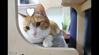 고양이한테 사랑한다고 말해주기 / 치즈태비 / 사랑스러…