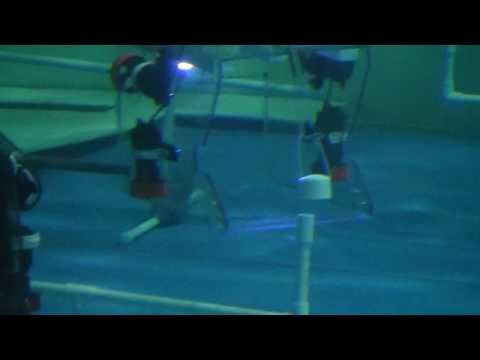 ROV competition Hillview Academy(2/3)