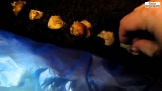 Семья Бровченко. Посадка картошки очистками (кожурой с глазками) - высаживаем в землю. (часть 1)