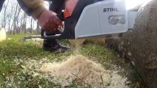 Stihl MS 180 - cutting down a tree - Slomo