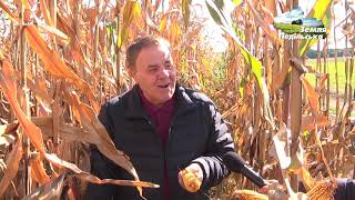 Гібриди кукурудзи Brevant Seeds у СТОВ ім. Б.Хмельницького і АФ Вербка
