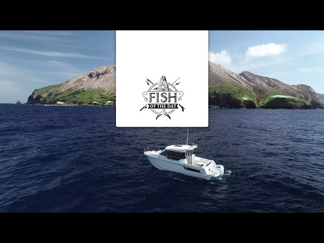 FISH OF THE DAY Saison 2 Episode 3 – White Island et son volcan en activité !