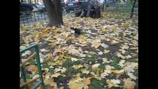 Черно белый кот в листве