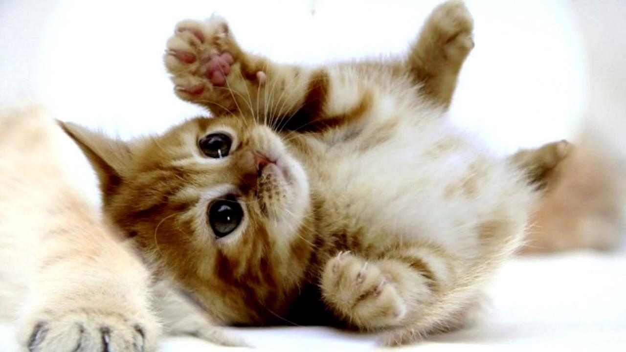 Compilation de petits chats mignons