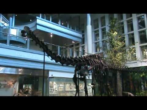 Teacher Feature Episode 6 - Carnegie Museum of Natural History
