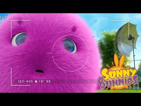 Cartoons for Children | Sunny Bunnies PHOTOSHOOT | Funny Cartoons For Children