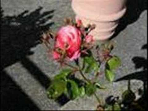 The Rose That Grew From Concrete By Tupac Shakur Youtube