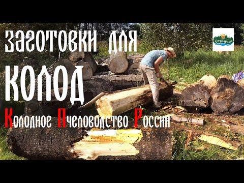 🐝 Заготовки для новых колод. Колодное пчеловодство России   Стрелёнки